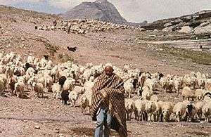 Subsistence Agriculture - http://socialstudies.school/2015/10/19/subsistence-agriculture/