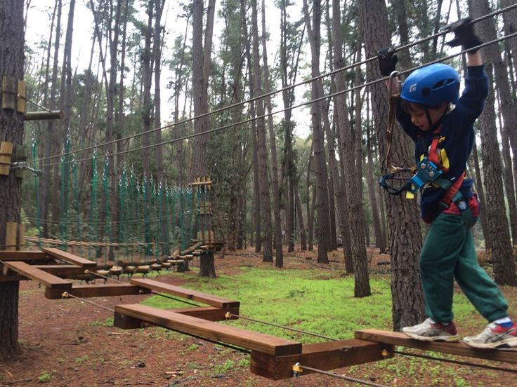 Enjoy the best family day out ever at WA's first trees ropes course Trees Adventure Lane Poole Park