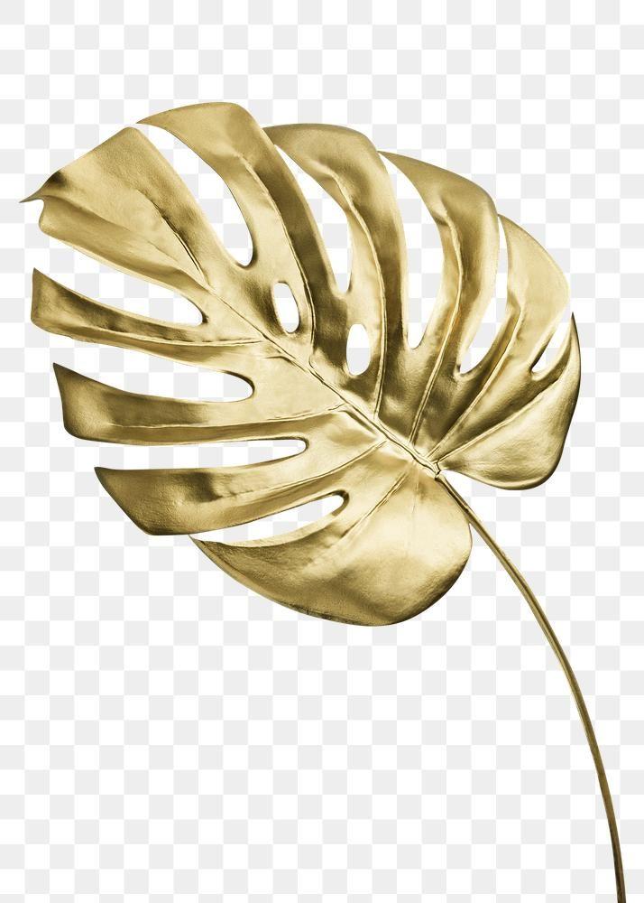 Shiny Golden Monstera Leaf Transparent Png Free Image By Rawpixel Com Teddy Rawpixel Wallpaper Design Pattern Leaf Illustration Canvas Art Wall Decor