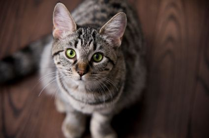 cleaning cat urine stains and odors