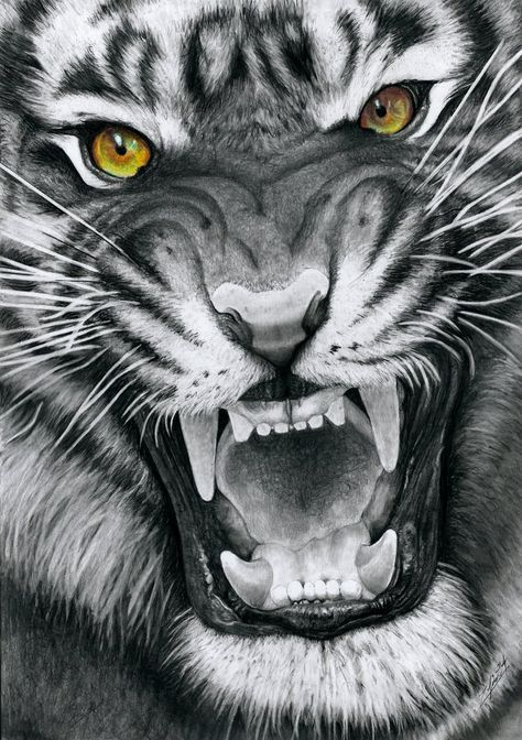 This is a drawing of my first tiger which is, what I think, one of the most beautiful animals in the world. Like the cat-drawings I made earlier, I'm coloring the eyes in this drawing but keep the ...