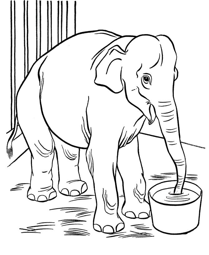 Zoo Animal Coloring Page Free Printable Elephant Pages Featuring Wild Sheets