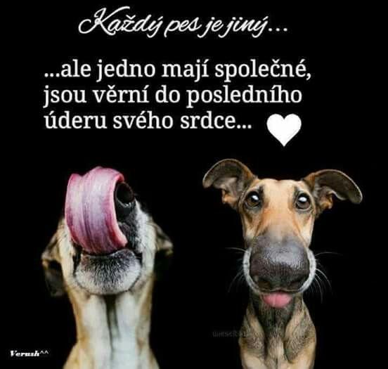 Miluju psy
