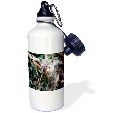 3dRose Australia, Sydney, Featherdale Wildlife Park, Koala Bears , Sports Water Bottle, 21oz