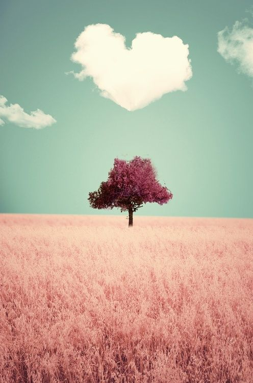 pink tree under the heart cloud