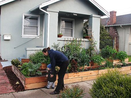 lawns are out front yard vegetable gardens are in for heres how to replace grass with edible landscaping that will feed your family and look great too