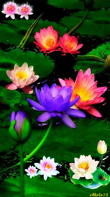 BEAUTIFUL FLOWERS FOR YOU ~^~^~^