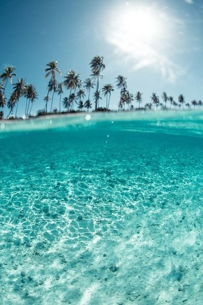Crystal clear water, blue skies and tropical palm trees.