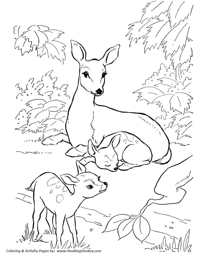 deer coloring page doe and fawn coloring page