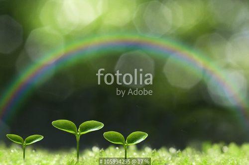 """森の中の芽生え"" zdjęć stockowych i obrazów royalty free w Fotolia.com - Obraz 105994295"