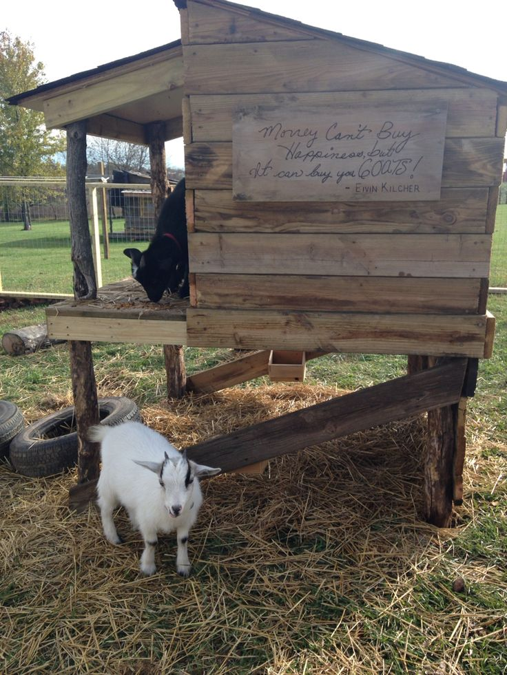 Money can't buy happiness  But, it can buy you goats!