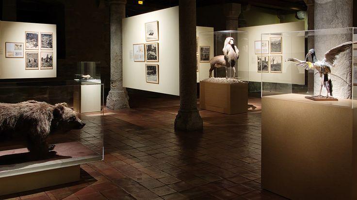 joan fontcuberta science museum exhibition - Google Search