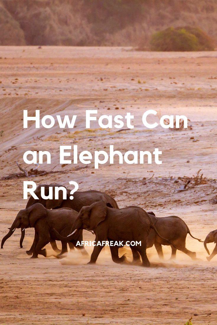 love safari full fast