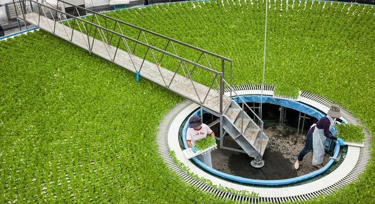 469 best images about aquaponics hydroponic on pinterest for Soil less farming