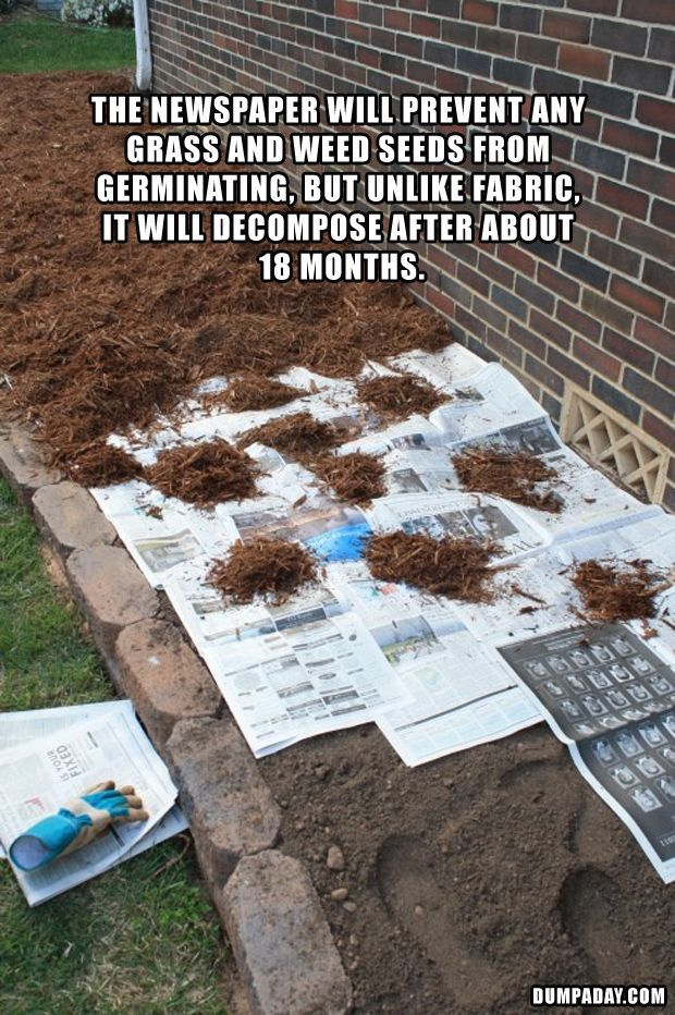 Use newspaper beneath mulch to keep the weeds out in your garden.Diana L. Carter