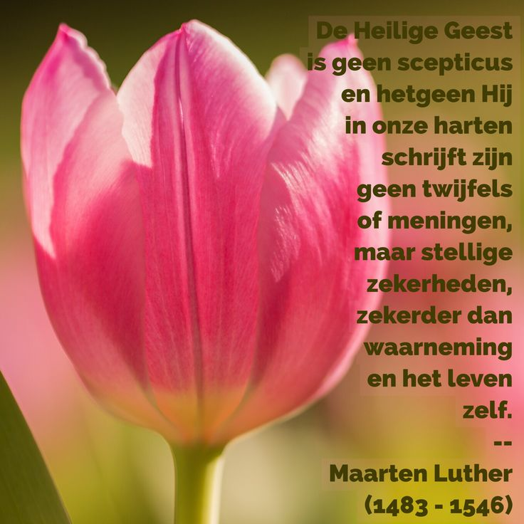 Citaten Maarten Luther : Beste ideeën over maarten luther citaten op pinterest