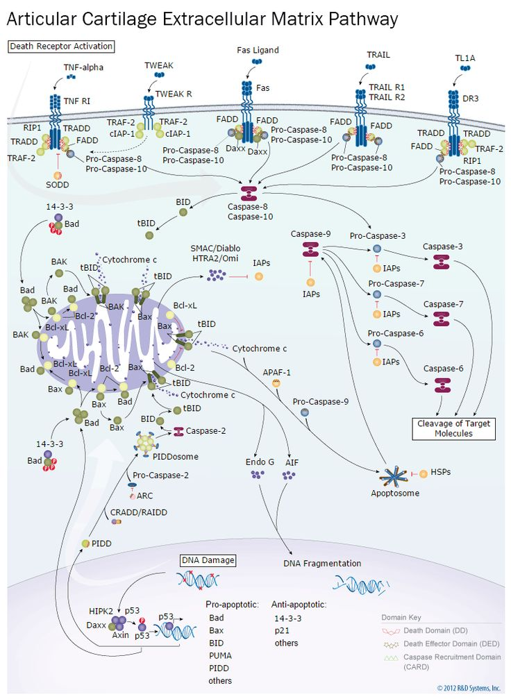 19 best 13-Immunology: The Cytokines and their Receptors images on ...