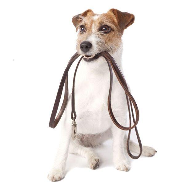 Pet Service - Dog Walker   Shop this product here: https://www.tiri.io:9443/Jon_Lucaya/details/252604087681/Pet-Service---Dog-Walker   Shop all of our products at https://www.instream.co:9443/Jon_Lucaya   Pinterest selling powered by Instream