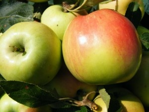 Healthier Apple Crisp (Paleo Approved): Yummy Breakfast, Paleo Apples Crisps, Healthy Apples Crisps, Apples Crisps Recipe, Apple Crisps, Breakfast Recipe, Paleo Recipes, Birthday Cakes, Apples Crisps It