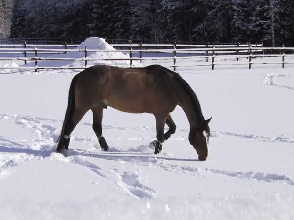 #Equstom #horses #pinski