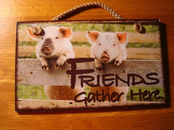 Friends Gather Here Pigs On Rustic Country Farm Fence Wood Home Decor Sign New