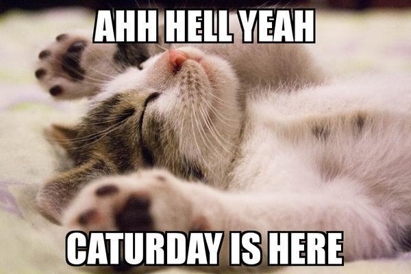 Caturday Funny Cat Meme #catmeme #cat #meme #caturday   Cat lovers ...