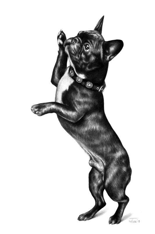 French Bulldog pencil drawing ORIGINAL 8 x 11 inch (21 x 29 cm) - Art by Kerli