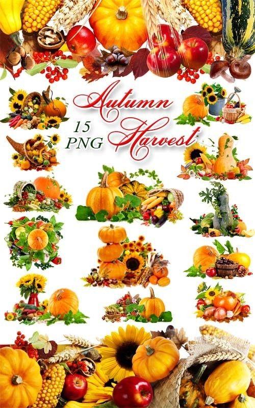 Осенний урожай - Композиции с тыквой на прозрачном фоне / Autumn Harvest