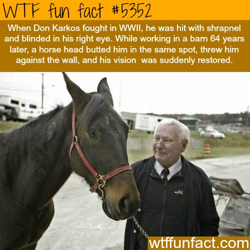This man's blind eye vision was restored after being hit by a horse! - WTF? awesome & fun facts