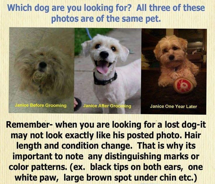 326 best Animals Products \ Info images on Pinterest Doggies - missing pet template