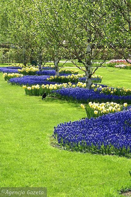 Zdjęcie numer 2 w galerii - Holandia wiosną. Keukenhof - Płonące Serce w kuchennym ogrodzie