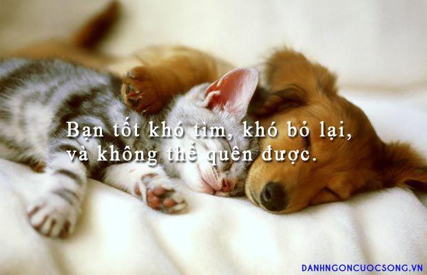Bạn tốt khó tìm, khó bỏ lại, và không thể quên được.  Read more: http://danhngoncuocsong.vn/danh-ngon/ban-tot-kho-tim-kho-bo-lai-va-khong-the-quen-duoc.html#ixzz3JHkIQ0HH