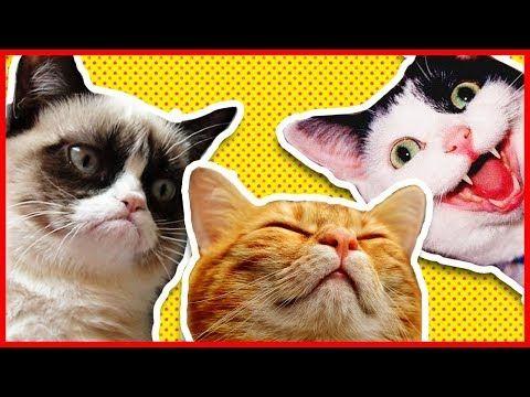 Prova A Non Ridere Gatti Pazzi 3 Narcolessia Felina Video