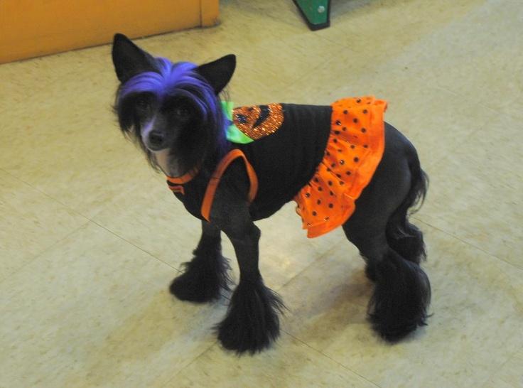 Best 25+ Dog hair dye ideas on Pinterest | Kool aid hair, Kool aid ...