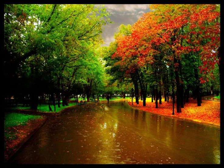 Great Great The Park In The Autumn Rain Desktop