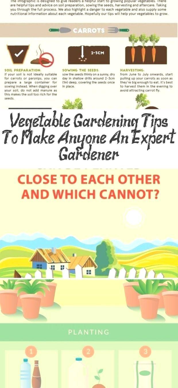 7edeae1e1fa2029ab14293f4b09f5d2b - Expert Gardener Plant Food How To Use