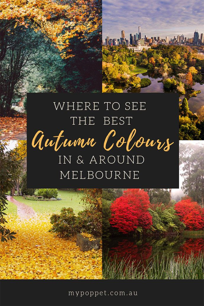 Where To See The Best Autumn Colours In Melbourne My Poppet Living Autumn In Australia Fall Colors Melbourne