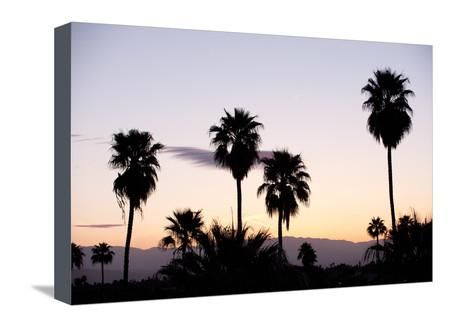 Silhouette of Palm Trees at Dusk, Palm Springs, Riverside County, California, USA Fotoprint