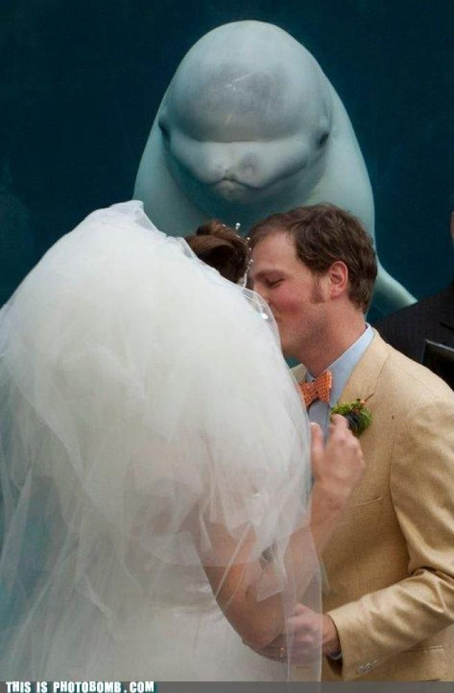 23 Awkward Wedding Photobombers... wouldn't be your wedding without an awkward turtle moment