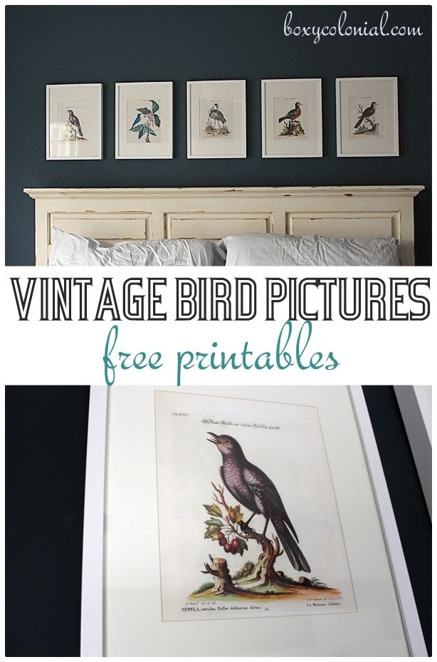 Great source for free printables: like these vintage birds, plus lots of other a...