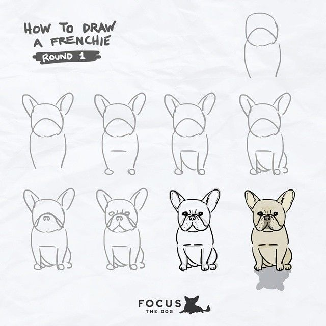 How to draw a Frenchie, French Bulldog illustration,