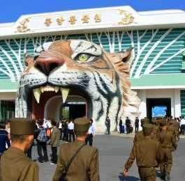 Giant Tiger Head Greets Visitors To North Korea's Central Zoo | PetsLady