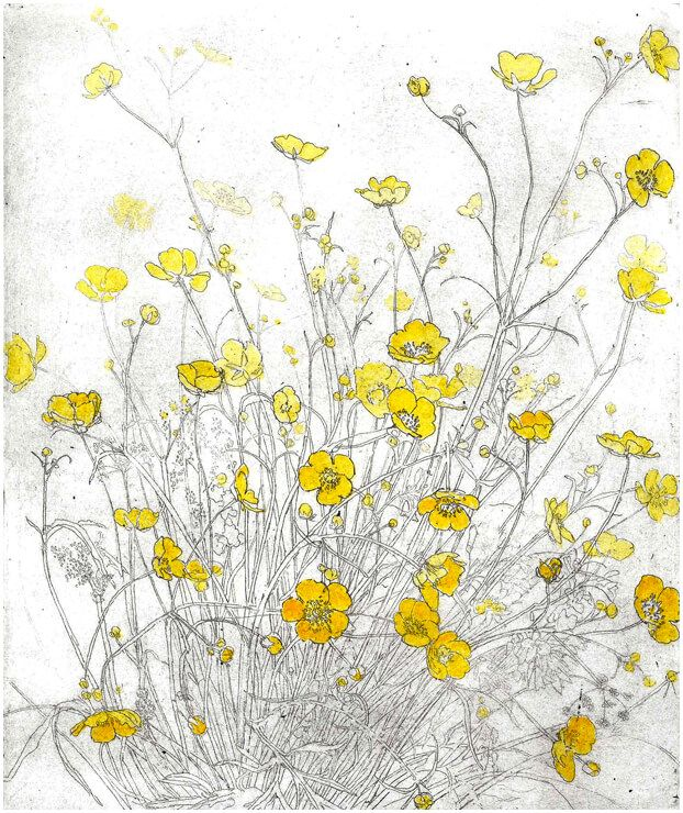 Limited edition etching Buttercups in a Field by contemporary British printmaker Mary Cossey.