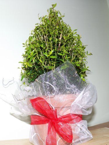 17 Best Images About Mother 39 S Day Gift Plants On Pinterest