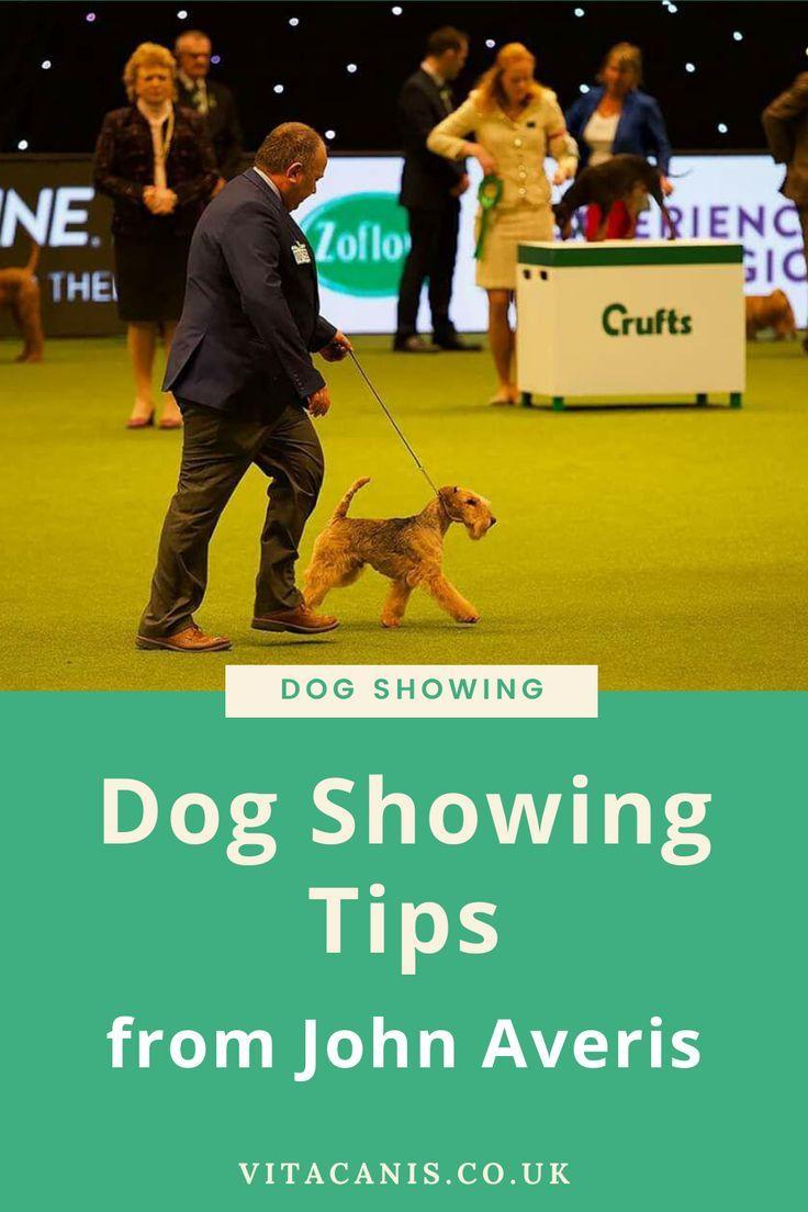Dog Showing Tips From John Averis Best Dog Toys Dogs Dog