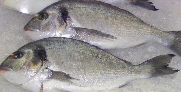 Dorade in Salzkruste - Rezept-Tipp - Einfacher lässt sich Fisch nicht zubereiten: Die TK erklärt dir Dorade in der Salzkruste