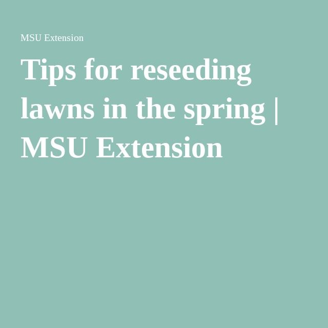 Tips for reseeding lawns in the spring | MSU Extension