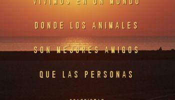 Vivimos en un mundo donde los animales son mejores amigos que las personas
