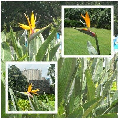 heliconias una hermosa opción para iluminar y definir tus espacios  tropicalflowers