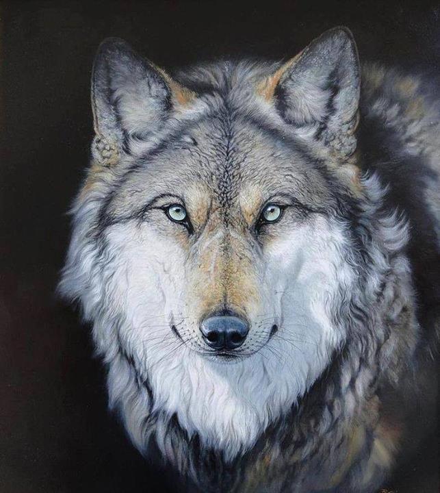 Wolves:  #Wolf.                                                                                                                                                                                 Plus                                                                                                                                                                                 Más